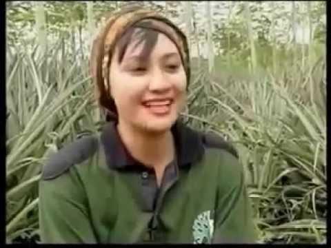 Video Budidaya Nanas di Bawah Tegakan Sengon di Perum Perhutani