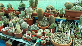 Watering Cacti & Succulents after Winter - How and When I do it