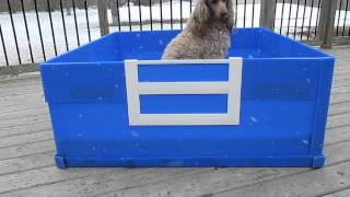 Whelping Box in Blue