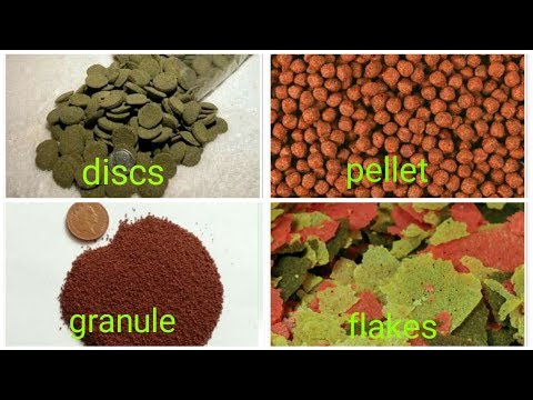 Fish Feed at Best Price in India