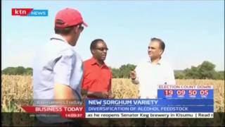 New sorghum variety launched to boost production for alcohol