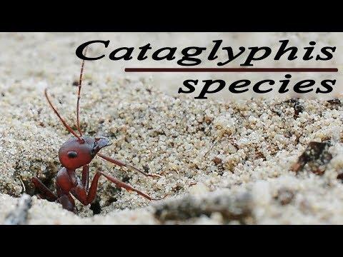 Makroparaziták meghatározása