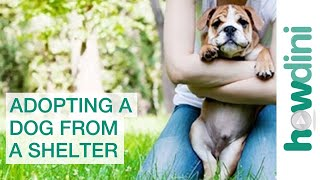 Adopting a Dog from a Shelter: Puppy Rescue Myths ...