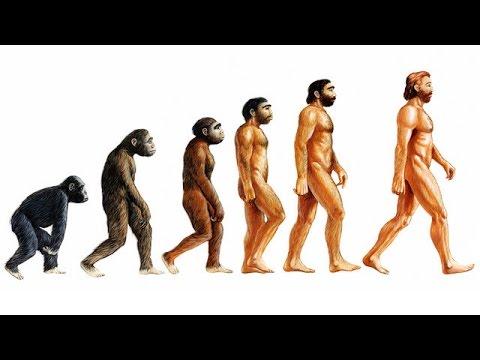 أشهر أدلة المؤمنين بنظرية التطور والرد عليها - خرافة نظرية التطور