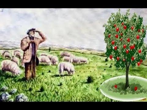 İbret Verici Dini Hikaye Yaşlı Çoban Ve Elma Ağacı