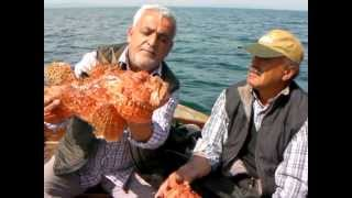 Necmi Fidan Kıyı balıkçısı Lipsoz Avı
