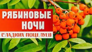 Александр Закшевский - «Рябиновые ночи» (Official Video)