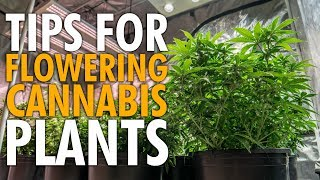 How To Prep Your Plants For Flower - Indoor Auto Grow
