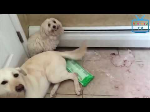 Funny Animal Mating - Super Funny Cats And Dogs Compilation 2017 Part 1