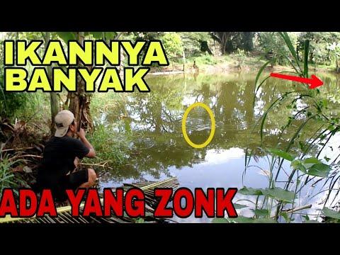 Mancing Pakai Joran TEGEK Strike Berkali Kali Ikan Tawes !!!
