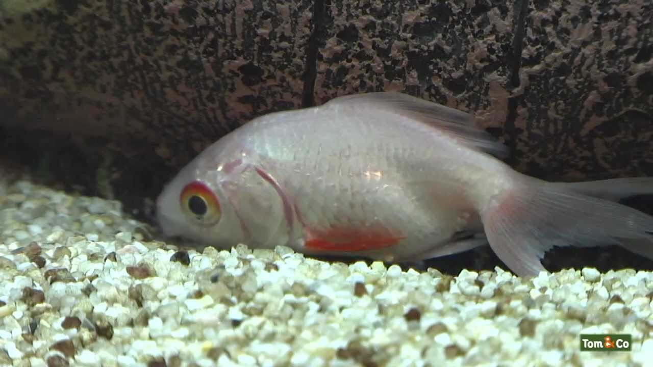 Malade - Mes poissons
