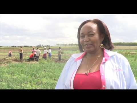 , title : 'Smart Farm: Onion Farming