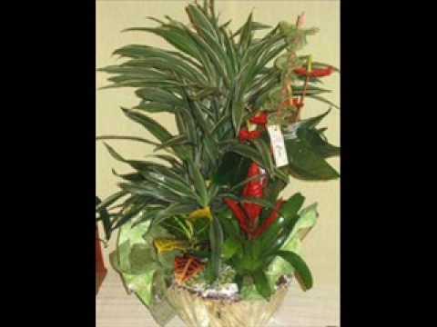 cestas de plantas