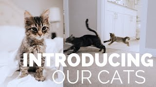 INTRODUCING OUR KITTEN TO OUR CAT | HEATHER FERN