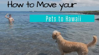 How to Move Your Pets To Hawaii 2020