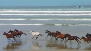 Lots of Horses Video