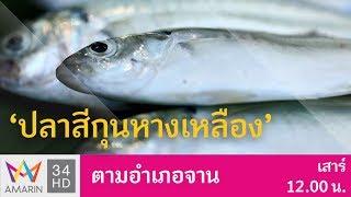 ตกปลาสีกุน ณ สามร้อยยอด | ตามอำเภอจาน | 24 ก.พ. 61 (2/3)