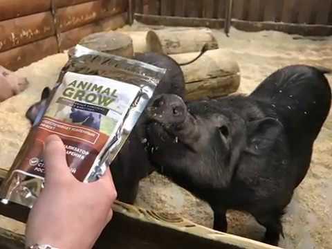 youtube ANIMAL GROW - биоактивный комплекс для животных
