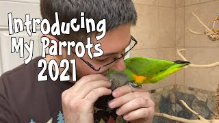 2021 Parrot Wizard Introduction