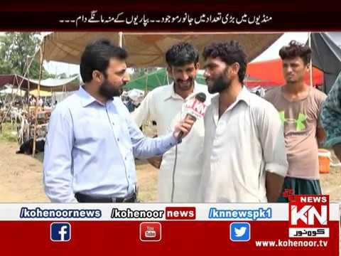 Shiqayat 11 August 2019 | Kohenoor News Pakistan