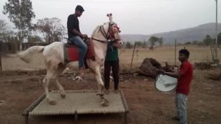Sonya horse nad khula 7798663328 9096497004
