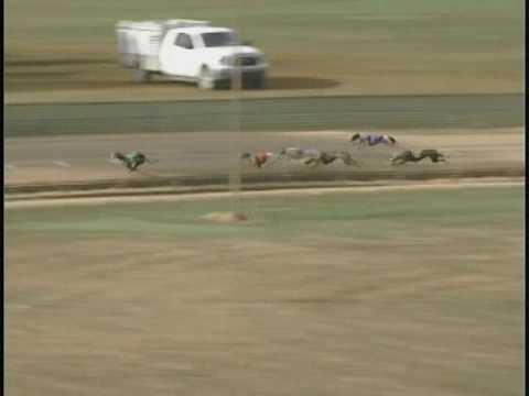 Race 11 Ben Stout Memorial Stake