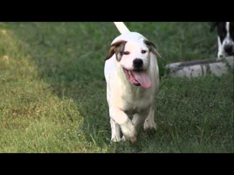 Pointer sisters adoption video.wmv