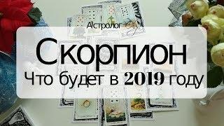8. СКОРПИОН Что будет в 2019 году. Астрорасклад от Olga