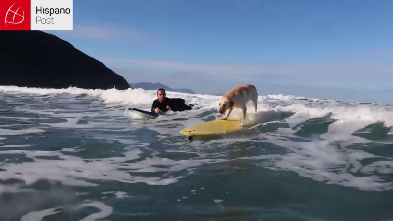 Conoce a Mendi el increíble perro surfista