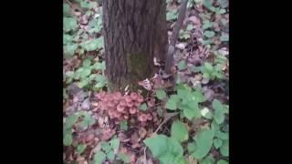 Грибника накрыло! Шок от находки на лесной поляне.