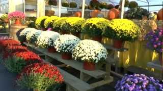 THE AMERICAN FLOWER SHOP