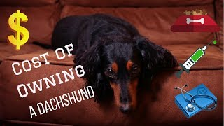 The Cost ($$) Of Owning A Mini Dachshund | For First-Time Dog Owners! | Are They Worth It?