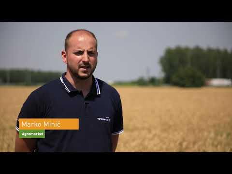 Vrhunske sorte pšenice 2 (Sobred, Sosthene, Sothys)