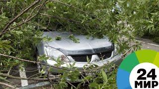 Ураган в Петербурге: закрыты сады и парки, спасатели расчищают завалы - МИР 24