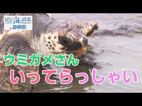 御前崎小学校ウミガメ放流 日本財団 海と日本PROJECT in 静岡県 2020 #07