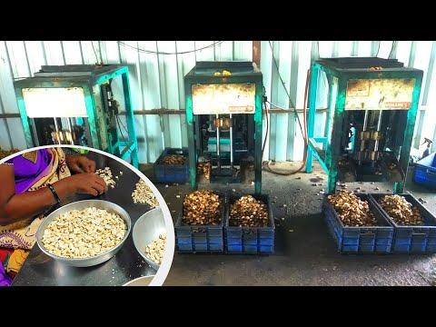, title : 'Cashew Manufacturing Is The Top Business Idea In 2021   Detailed Process Of  Cashew Nuts