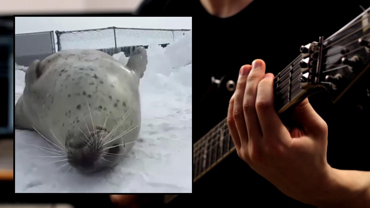Тюлень играет метал