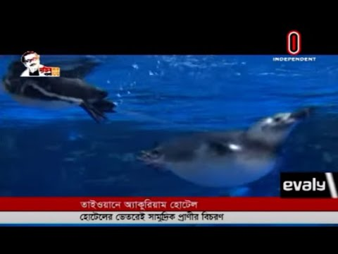 Aquarium Hotel: Marine fish roam inside the hotel (25-10-20) Courtesy: Independent TV