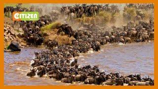 Kenya Tourism Destination Ambassador Eliud Kipchoge In Maasai Mara To Witness Wildbeest Migration