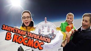 Запустили тараканов в космос