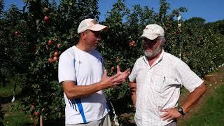 Stem Clipping Honeycrisp Apples