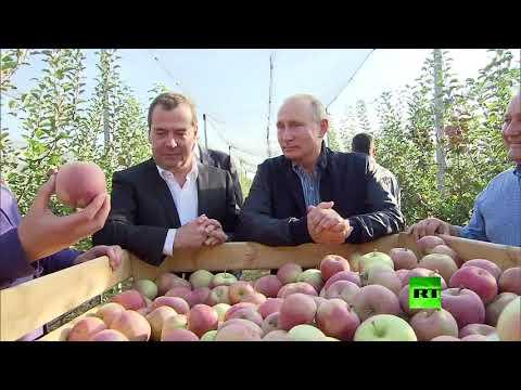 العرب اليوم - بوتين يحضر حزمة من المنتجات الزراعية الروسية لإهدائها لنظيره المصري