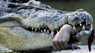 Слабонервным НЕ СМОТРЕТЬ!!! Смертельно Опасные Животные  Австралия Хищники Которых Стоит Опасаться!