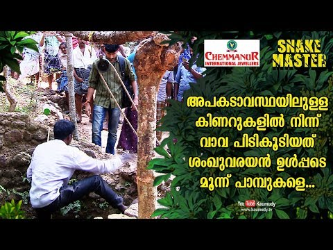 Vava Suresh caught three snakes including Indian Kraits from