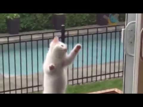 Funny Cats ECards Adorable Kittens video about funny kittens