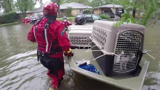 Rescuing thousands of animals from disasters by The Humane Society of the United States