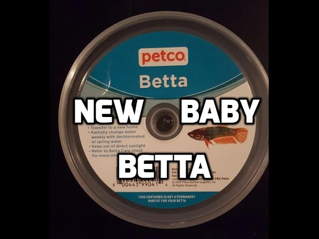 New Baby Betta Fish | For New 5 Gallon Betta Tank