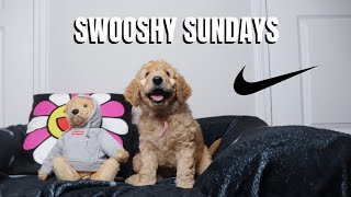 WE GOT A PUPPY! BRINGING HOME OUR 6 WEEK OLD LABRADOODLE - SWOOSHY SUNDAY EP.1 🐶