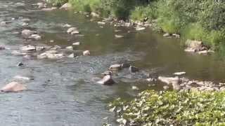 Главное бассейновое управление по рыболовству и сохранению водных
