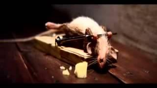 Мыш и мышеловка - прикол ))))